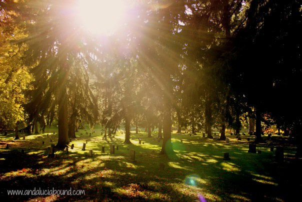Fall Sun Cemetery