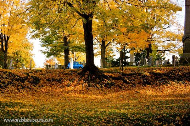 Fall Tree Roots